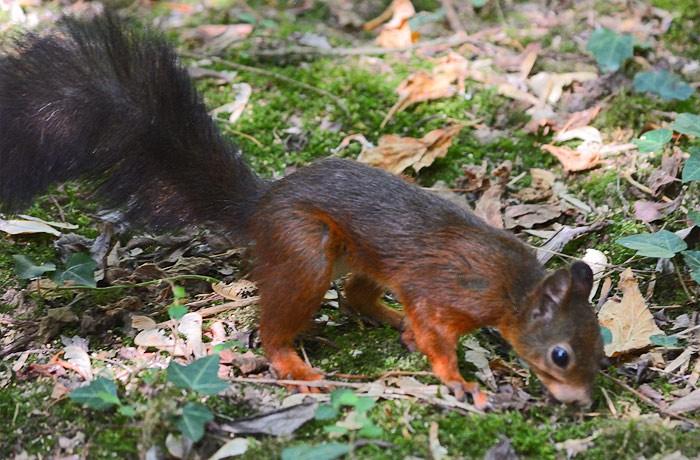 scoiattolo-700x460